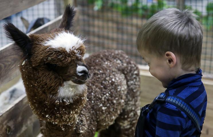 какая зарплата у директора московского зоопарка