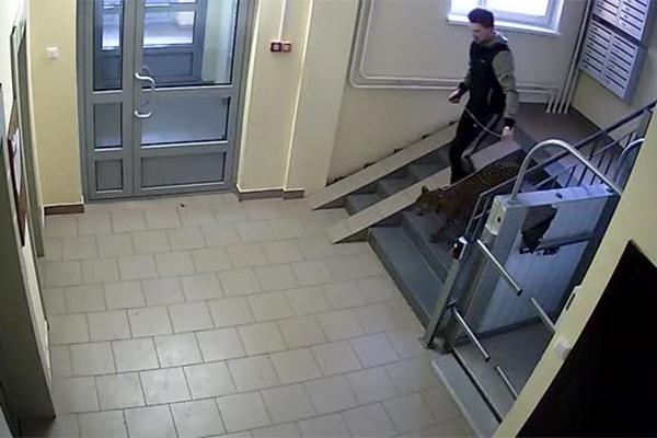 Мужчина погулял с леопардом на детской площадке