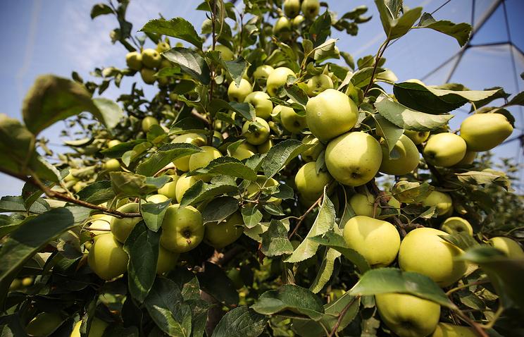 Уральские ученые высадят новые сорта яблонь и груш в экспериментальном плодовом саду