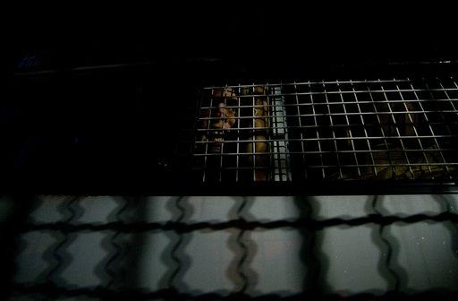 Северная Корея освободила из тюрьмы троих американцев