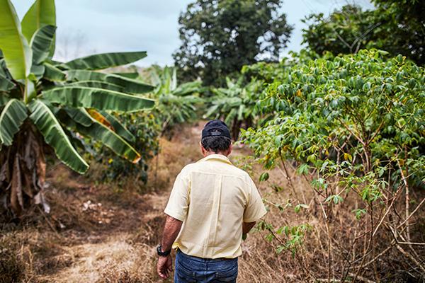 Ценителям предложат галапагосский кофе