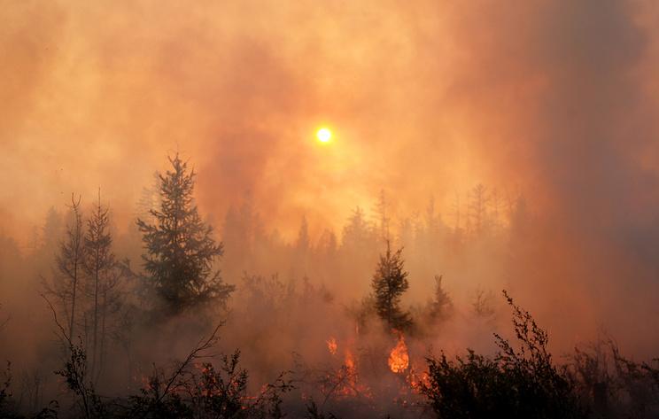 Площадь лесных пожаров в России за сутки выросла на 9,1 тыс. га