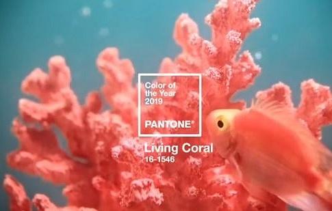 """Институт Pantone назвал оттенок """"Живой коралл"""" главным цветом 2019 года"""