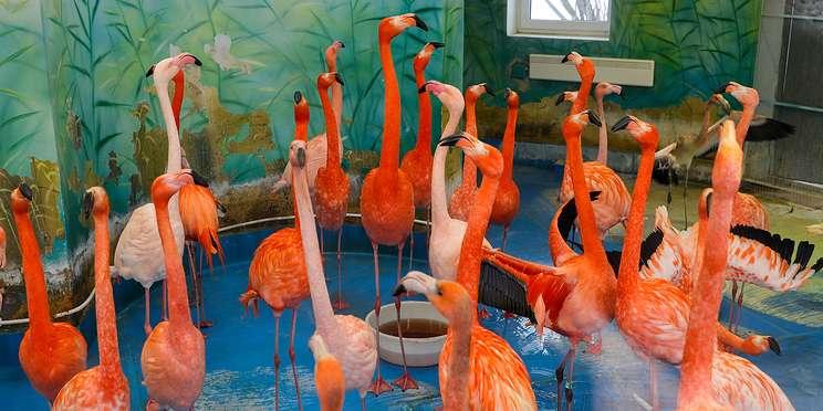 Тимофей, сварливые фламинго и самая опасная в мире птица. Прогулка по Московскому зоопарку