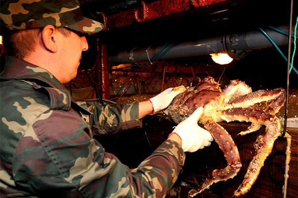 Российские полицейские накрыли незаконный цех по переработке крабов