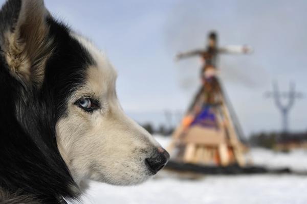 Кинолог опроверг существование опасны пород собак
