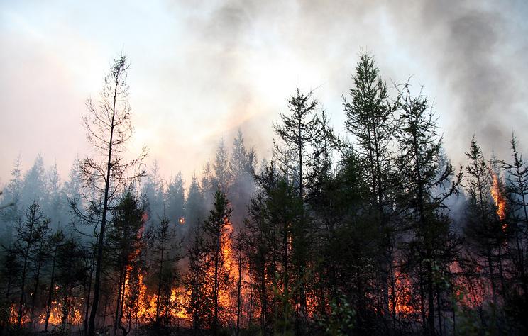 Число пострадавших от пожаров в Забайкалье возросло до 27 человек