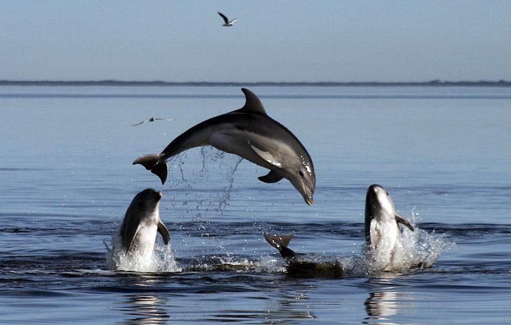 Ученые зафиксировали аномально высокую смертность дельфинов