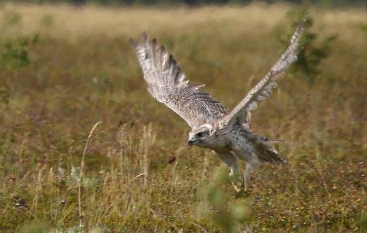 Ведущие орнитологи мира примут участие в создании соколиного центра на Камчатке