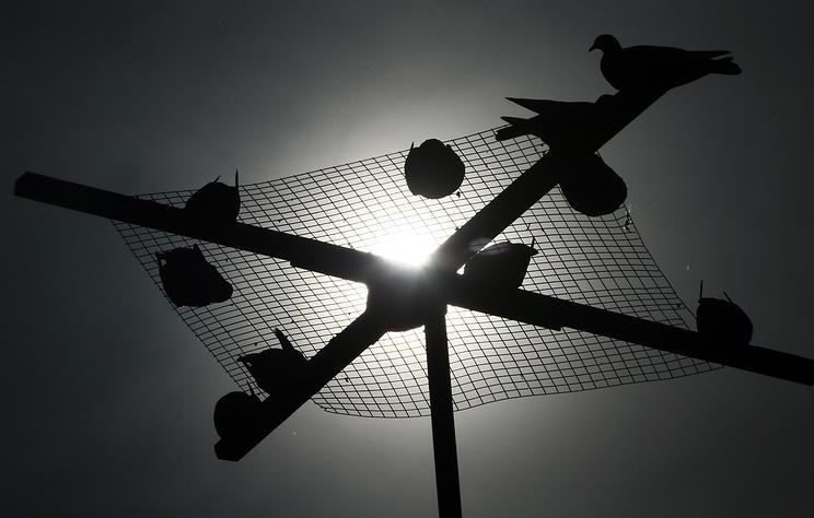 ЦРУ рассекретило документы о программе подготовки голубей-шпионов для отправки в СССР