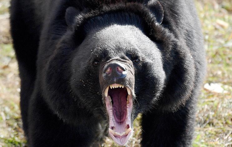 """Предупреждающие знаки """"Осторожно, медведь"""" появятся на Курилах"""
