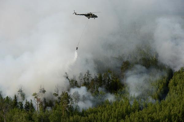 Минприроды предложило не жалеть денег на тушение лесных пожаров
