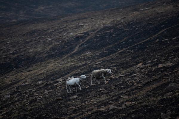 В австралийских пожарах погибло более миллиарда животных