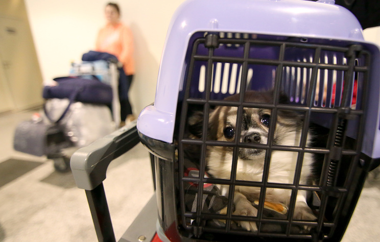 Минтранс обсудит с авиакомпаниями перевозку животных в салоне самолета