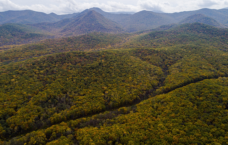 Приморью ежегодно не хватает более 340 млн рублей для борьбы с лесными пожарами
