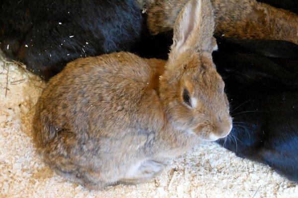 Военнослужащих заставили разводить кроликов для пропитания