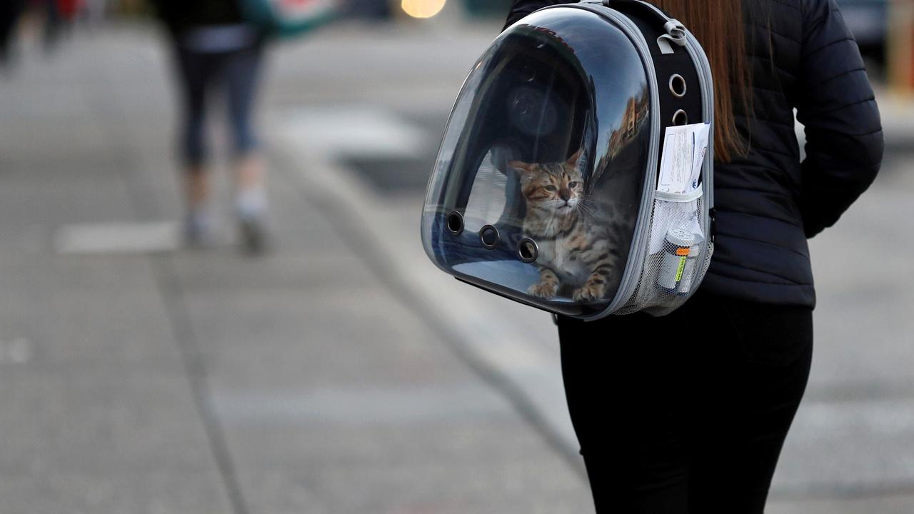 Ученые выявили способ определять степень боли у кошек по мимике