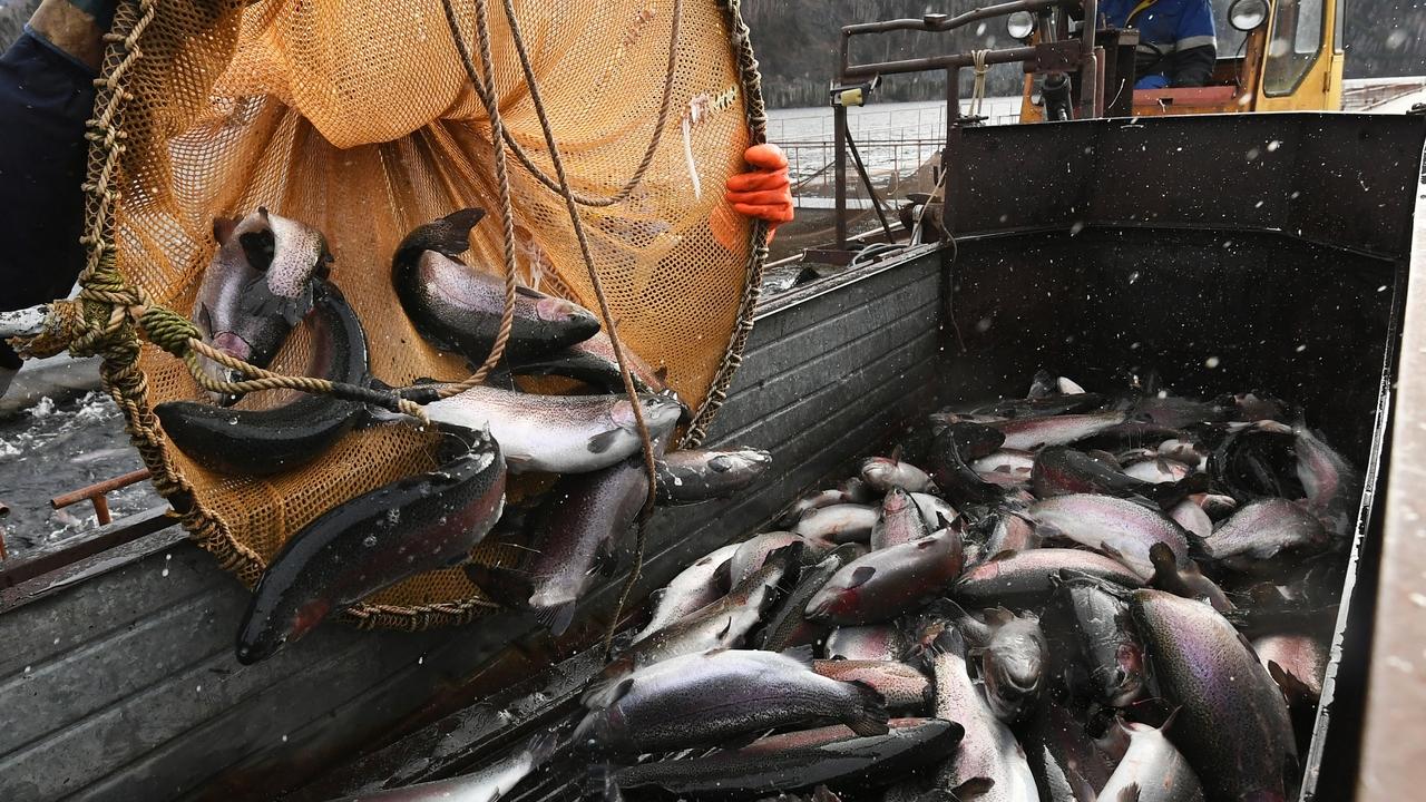 Китай выявил коронавирус на рыбе с российского судна и приостановил поставки