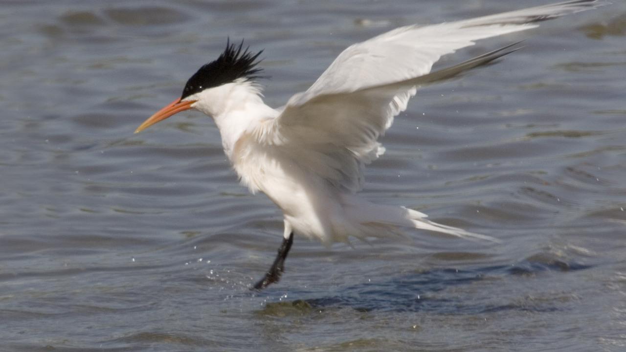 Тысячи птиц испугались дрона и бросили свои гнезда