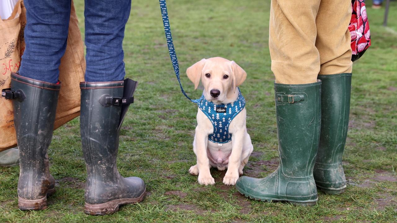 Зоологи назвали собак «запрограммированными» на дружбу с людьми