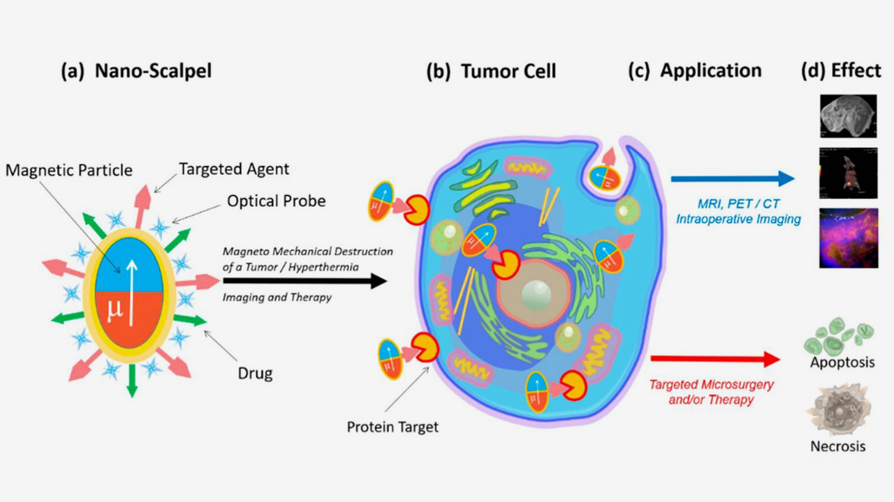 Сибирские ученые создали нанодиски для выжигания раковых клеток