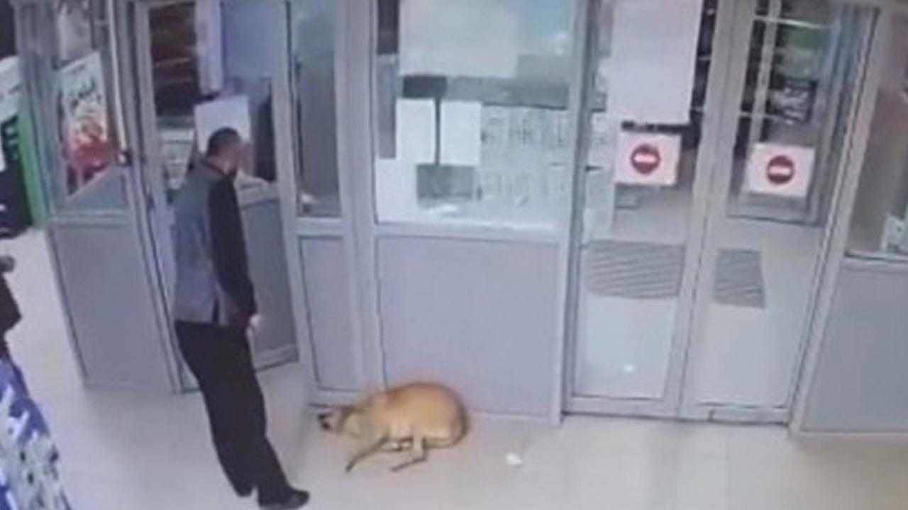Появились подробности отравления собак в «Магните» под Астраханью