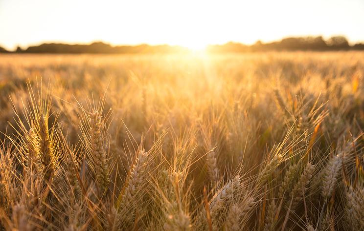 """Поля """"Балтики"""": как фокус на экологию делает сельское хозяйство более выгодным"""